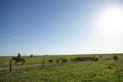 Αγελάδες που βόσκουν στο λιβάδι πίσω από τον ηλεκτρικό φράκτη στοκ φωτογραφίες με δικαίωμα ελεύθερης χρήσης