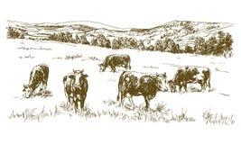 Αγελάδες που βόσκουν στο λιβάδι απεικόνιση αποθεμάτων