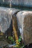 Αγελάδα και λιβάδια Irpinia apennines ιταλικά Campania Νότος Ita Στοκ Εικόνες
