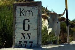 αγελάδα περίεργη στοκ εικόνα με δικαίωμα ελεύθερης χρήσης