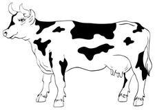Αγελάδα που απομονώνεται σε ένα άσπρο υπόβαθρο Στοκ Εικόνες
