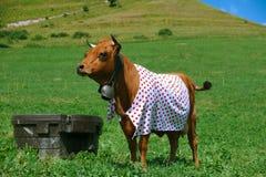 Αγελάδα που ντύνεται στο σημείο Πόλκα Στοκ Εικόνες