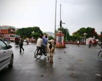 Αγελάδα που στέκεται στη μέση της διατομής στην Ινδία στοκ φωτογραφία με δικαίωμα ελεύθερης χρήσης