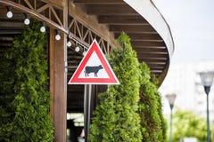 Αγελάδα προσοχής προειδοποιητικών σημαδιών σκιαγραφία Στοκ Φωτογραφία