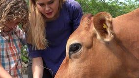 Αγελάδα στο αγρόκτημα βοοειδών φιλμ μικρού μήκους