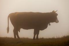 Αγελάδα στο λιβάδι παράδεισος φύσης στοιχείων σχεδίου σύνθεσης Στοκ Φωτογραφία