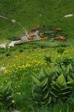Αγελάδα Tarine στο κραμπολάχανο, Γαλλία στοκ εικόνες με δικαίωμα ελεύθερης χρήσης