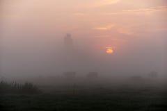 Αγελάδες ένα πρωί της Misty στοκ εικόνες