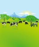 Αγελάδες που βόσκουν στην επαρχία στοκ φωτογραφίες με δικαίωμα ελεύθερης χρήσης