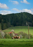 Αγελάδες σε ένα πράσινο λιβάδι σε ένα υπόβαθρο των βουνών και του μπλε ουρανού Στοκ Εικόνα