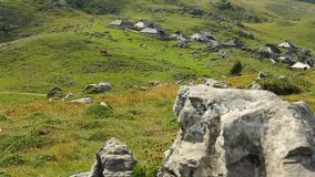Αγελάδες στα βουνά φιλμ μικρού μήκους