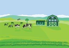 Αγελάδες στο λιβάδι στο αγρόκτημα Στοκ Φωτογραφίες