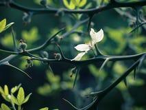 αγκάθια λουλουδιών Στοκ Φωτογραφία