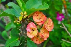 Αγκάθια λουλουδιών Στοκ Εικόνα