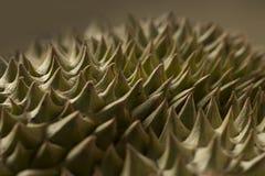 Αγκάθια Durian Στοκ φωτογραφία με δικαίωμα ελεύθερης χρήσης