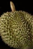Αγκάθια Durian Στοκ Εικόνες