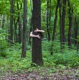 αγκάλιασμα του δέντρου Κινηματογράφηση σε πρώτο πλάνο των χεριών που αγκαλιάζουν το δέντρο α Στοκ Φωτογραφία