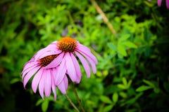 Αγκάλιασμα των λουλουδιών Στοκ Εικόνα