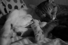 Αγκαλιάζοντας γατάκια, ένα που φτάνουν στοκ εικόνα με δικαίωμα ελεύθερης χρήσης