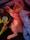 Αγκαλιάζοντας γατάκι στοκ εικόνα