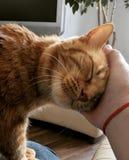 Αγκαλιά με τη γάτα στοκ φωτογραφία με δικαίωμα ελεύθερης χρήσης