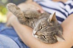 Αγκαλιά της γάτας στοκ φωτογραφίες με δικαίωμα ελεύθερης χρήσης
