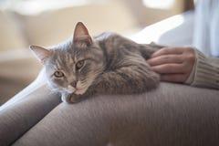 Αγκαλιά γατών Στοκ εικόνες με δικαίωμα ελεύθερης χρήσης