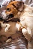 Αγκαλιά σκυλιών και γατών στο κρεβάτι Στοκ Εικόνα