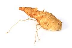 Αγκινάρα της Ιερουσαλήμ (tuberosus Helianthus) Στοκ εικόνες με δικαίωμα ελεύθερης χρήσης
