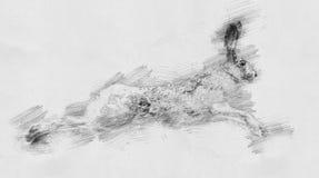 λαγοί Σκίτσο με το μολύβι Στοκ Φωτογραφία