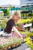 αγοράζοντας νέα φυτά Στοκ Φωτογραφίες