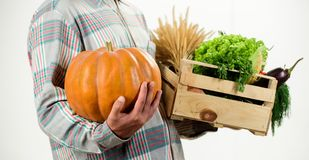 Αγοράστε τα φρέσκα homegrown λαχανικά Ακριβώς από τον κήπο Η Farmer φέρνει τα λαχανικά συγκομιδών κιβωτίων ή καλαθιών άριστη ποιό στοκ φωτογραφίες
