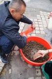 Αγοράστε conch Στοκ Εικόνες