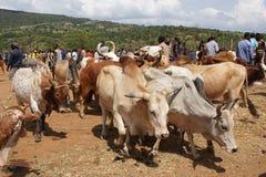 Αγορά βοοειδών, βασικό Afer, Αιθιοπία, Αφρική Στοκ Φωτογραφίες