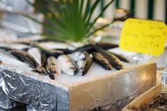 Αγορά θαλασσινών Στοκ φωτογραφίες με δικαίωμα ελεύθερης χρήσης