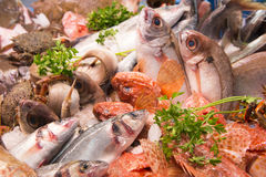 Αγορά Ισπανία ψαριών Στοκ Φωτογραφίες