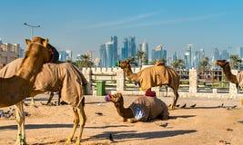 Αγορά καμηλών σε Souq Waqif σε Doha, Κατάρ στοκ φωτογραφία