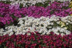 Αγορά λουλουδιών λουλούδια που τακτοποιούνται στο κιβώτιο στοκ εικόνες με δικαίωμα ελεύθερης χρήσης