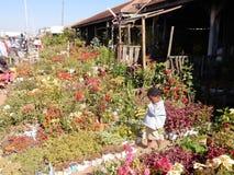 Αγορά λουλουδιών στην πόλη Antananarivo, Μαδαγασκάρη Στοκ φωτογραφία με δικαίωμα ελεύθερης χρήσης