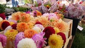 Αγορά λουλουδιών όπως το χρυσάνθεμο απόθεμα βίντεο