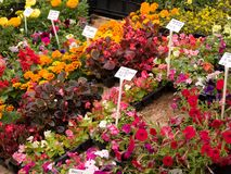 αγορά λουλουδιών Στοκ εικόνα με δικαίωμα ελεύθερης χρήσης