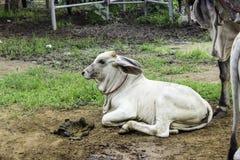 Αγορά μεταπώλησης το Buffalo και οι αγελάδες Ταϊλάνδη Στοκ φωτογραφίες με δικαίωμα ελεύθερης χρήσης