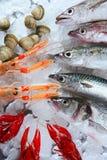 αγορά πάγου πέρα από τα θαλ&al Στοκ Εικόνες