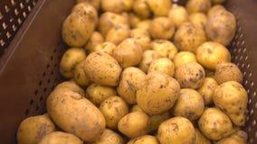 Αγορά πατατών Οι πατάτες κλείνουν επάνω στο πρώτο πλάνο απόθεμα βίντεο