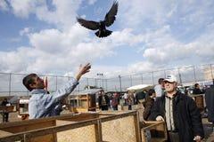 αγορά πουλιών Στοκ Εικόνες
