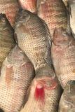 αγορά σωρών ψαριών ανοικτή Στοκ φωτογραφίες με δικαίωμα ελεύθερης χρήσης