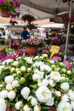 Αγορά της Ρώμης, Campo de «Fiori Στοκ Εικόνα