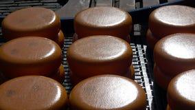 Αγορά τυριών στο Αλκμάαρ, Κάτω Χώρες φιλμ μικρού μήκους