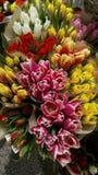 Αγορά των χρωματισμένων λουλουδιών για τη φίλη Στοκ εικόνα με δικαίωμα ελεύθερης χρήσης