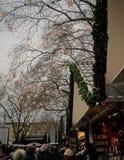 Αγορά Χριστουγέννων της Κολωνίας Στοκ Φωτογραφία